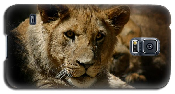 Lion Cub Galaxy S5 Case