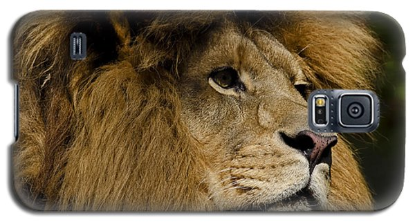 Lion Gaze Galaxy S5 Case