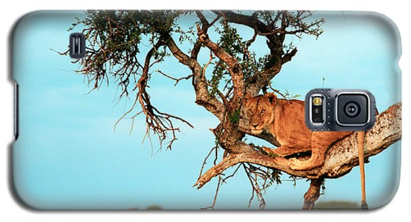 Lioness In Africa Galaxy S5 Case by Sebastian Musial
