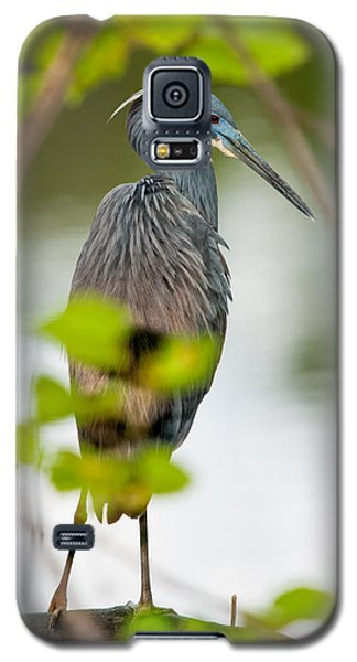 Galaxy S5 Case featuring the photograph Little Blue Heron by Christopher Holmes