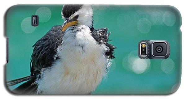 Little Pied Cormorant I Galaxy S5 Case by Cassandra Buckley