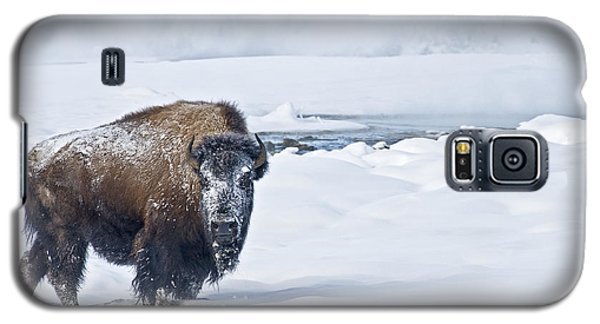 Lone Bison Galaxy S5 Case by Gary Lengyel