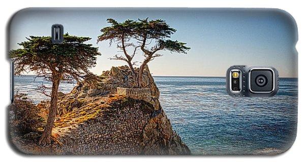 Lone Cypress Tree Galaxy S5 Case by James Hammond
