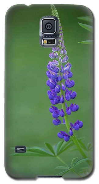 Galaxy S5 Case featuring the photograph Graceful Lupine by Jacqui Boonstra
