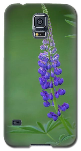 Graceful Lupine Galaxy S5 Case