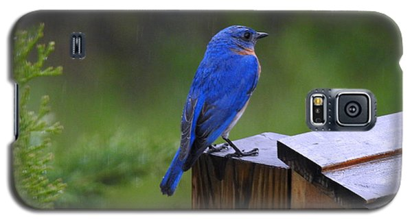 Galaxy S5 Case featuring the photograph Male Bluebird  by Brenda Bostic