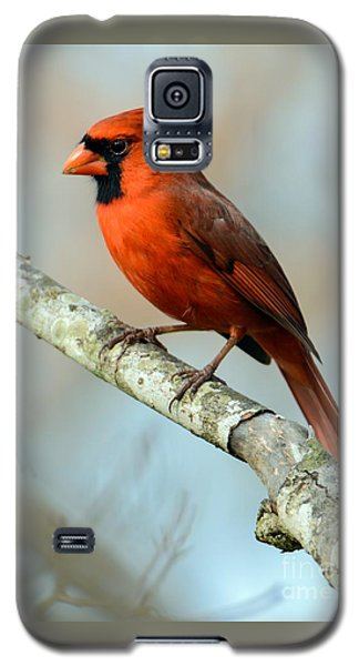 Male Cardinal Galaxy S5 Case
