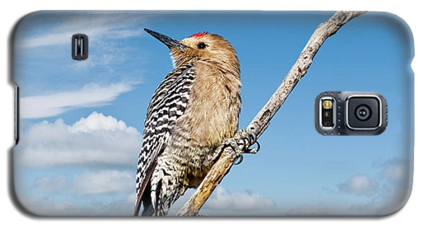 Male Gila Woodpecker Galaxy S5 Case