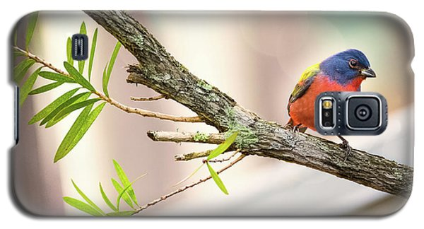 Male Painted Bunting Galaxy S5 Case