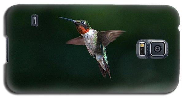 Male Ruby Throated Hummingbird Galaxy S5 Case