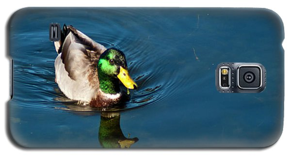 Mallard Galaxy S5 Case by Bill Barber