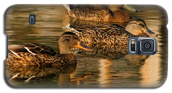 Mallards Swimming In The Water At Magic Hour Galaxy S5 Case
