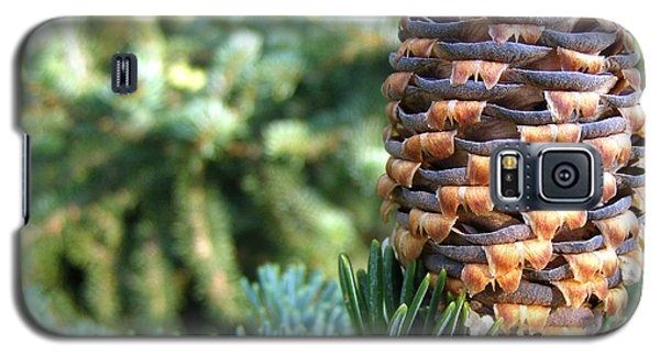 Galaxy S5 Case featuring the photograph Masterful Construction - Spruce Cone by Angie Rea