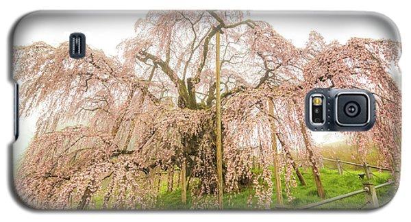 Galaxy S5 Case featuring the photograph Miharu Takizakura Weeping Cherry02 by Tatsuya Atarashi