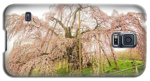 Miharu Takizakura Weeping Cherry02 Galaxy S5 Case