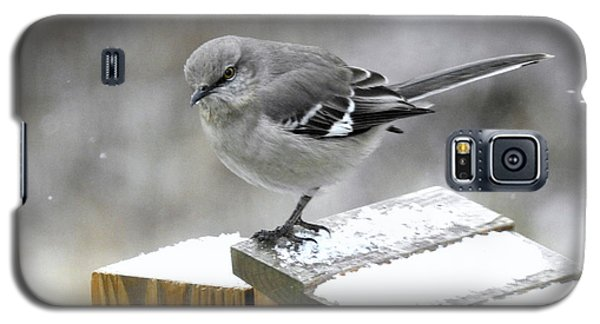 Galaxy S5 Case featuring the photograph Mockingbird  by Brenda Bostic