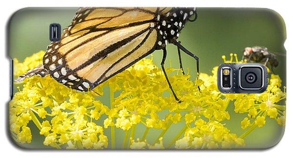 Monarch Butterfly Galaxy S5 Case by Ricky L Jones