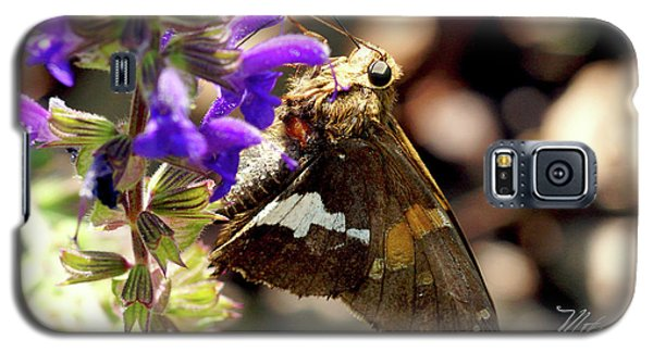 Galaxy S5 Case featuring the photograph Moth On Purple Flower by Meta Gatschenberger