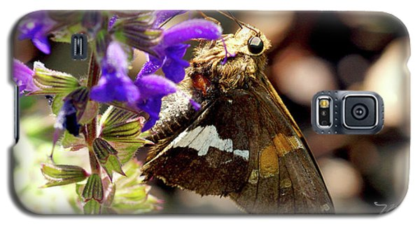 Moth Snack Galaxy S5 Case
