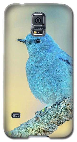 Galaxy S5 Case featuring the photograph Mountain Bluebird by Angie Vogel