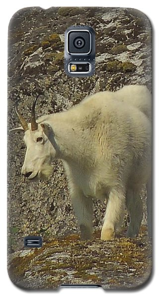 Mountain Goat Ewe Galaxy S5 Case