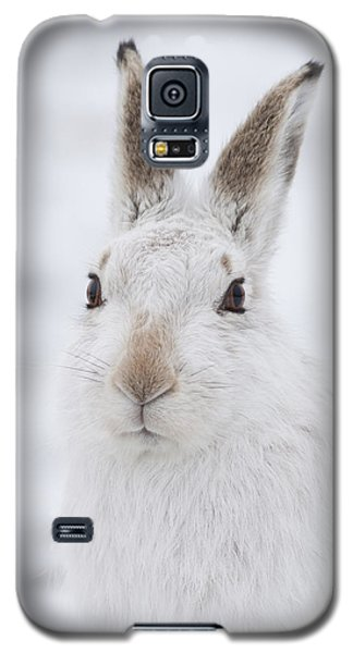 Mountain Hare In The Snow - Lepus Timidus  #1 Galaxy S5 Case