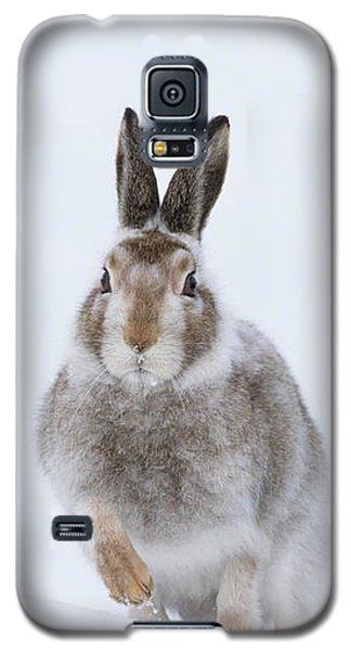 Mountain Hare - Scotland Galaxy S5 Case