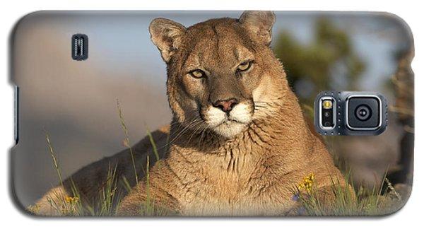 Mountain Lion Portrait North America Galaxy S5 Case