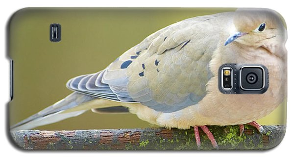 Mourning Dove On Tree Branch Galaxy S5 Case