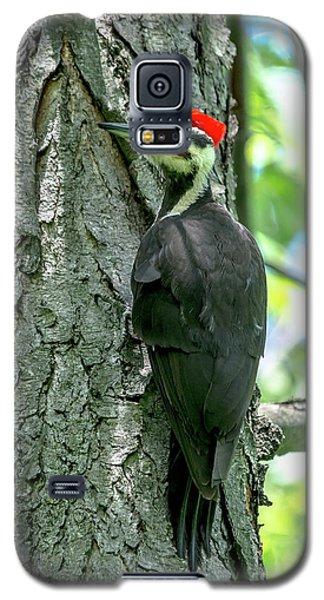 Mr. Pileated Woodpecker Galaxy S5 Case