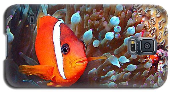Nemo Galaxy S5 Case