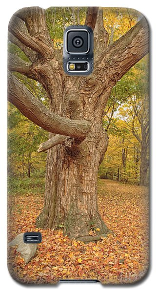 Odiorne Point State Park - Rye New Hampshire Galaxy S5 Case