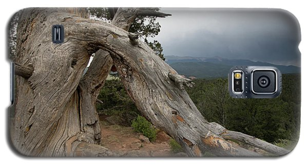 Old Tree On The Mountain Galaxy S5 Case