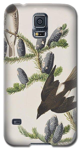 Olive Sided Flycatcher Galaxy S5 Case by John James Audubon