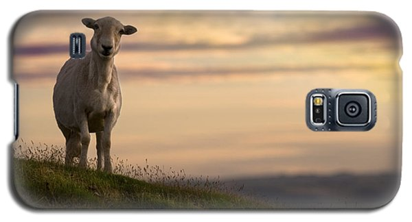 Sheep Galaxy S5 Case - On The Top Of The World by Angel Ciesniarska