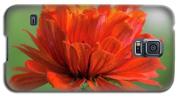 Red Zinnia  Galaxy S5 Case by Jim Hughes