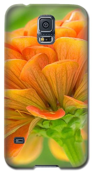 Orange Zinnia  Galaxy S5 Case by Jim Hughes
