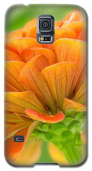 Orange Zinnia  Galaxy S5 Case