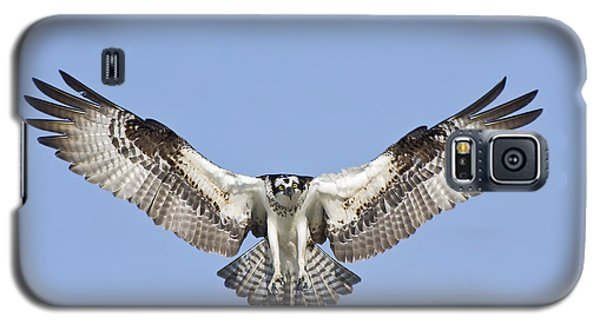 Galaxy S5 Case featuring the photograph Osprey In Flight by Bob Decker