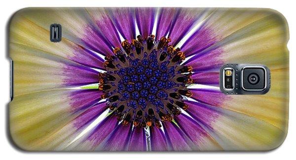 Osteospermum The Cape Daisy Galaxy S5 Case