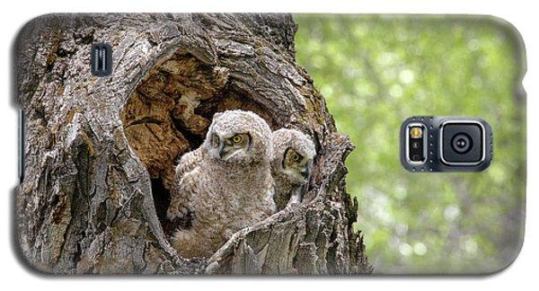 Owlets Galaxy S5 Case