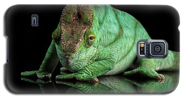 Parson Chameleon, Calumma Parsoni Orange Eye On Black Galaxy S5 Case by Sergey Taran