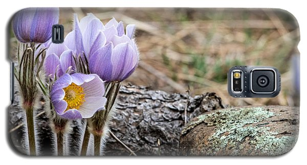 Pasque Flower Galaxy S5 Case
