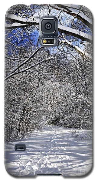 Path In Winter Forest Galaxy S5 Case