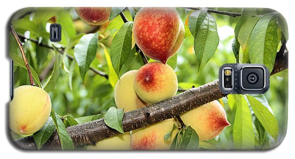 Galaxy S5 Case featuring the photograph Peaches by Kristin Elmquist