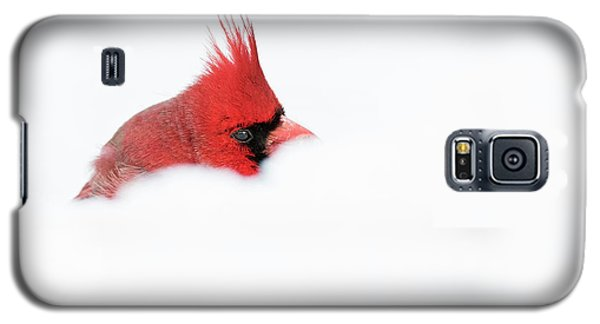 Galaxy S5 Case featuring the photograph Peekaboo by Mircea Costina Photography