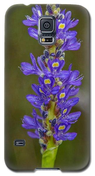 Pickerel Weed Galaxy S5 Case