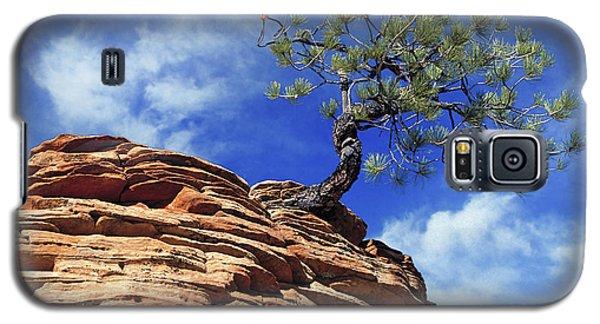 Pine Tree In Sandstone Galaxy S5 Case