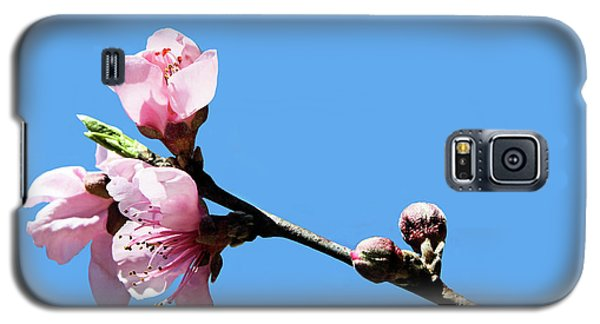 Galaxy S5 Case featuring the photograph Plum Blossoms by Kristin Elmquist