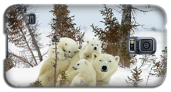 Polar Bear Ursus Maritimus Trio Galaxy S5 Case